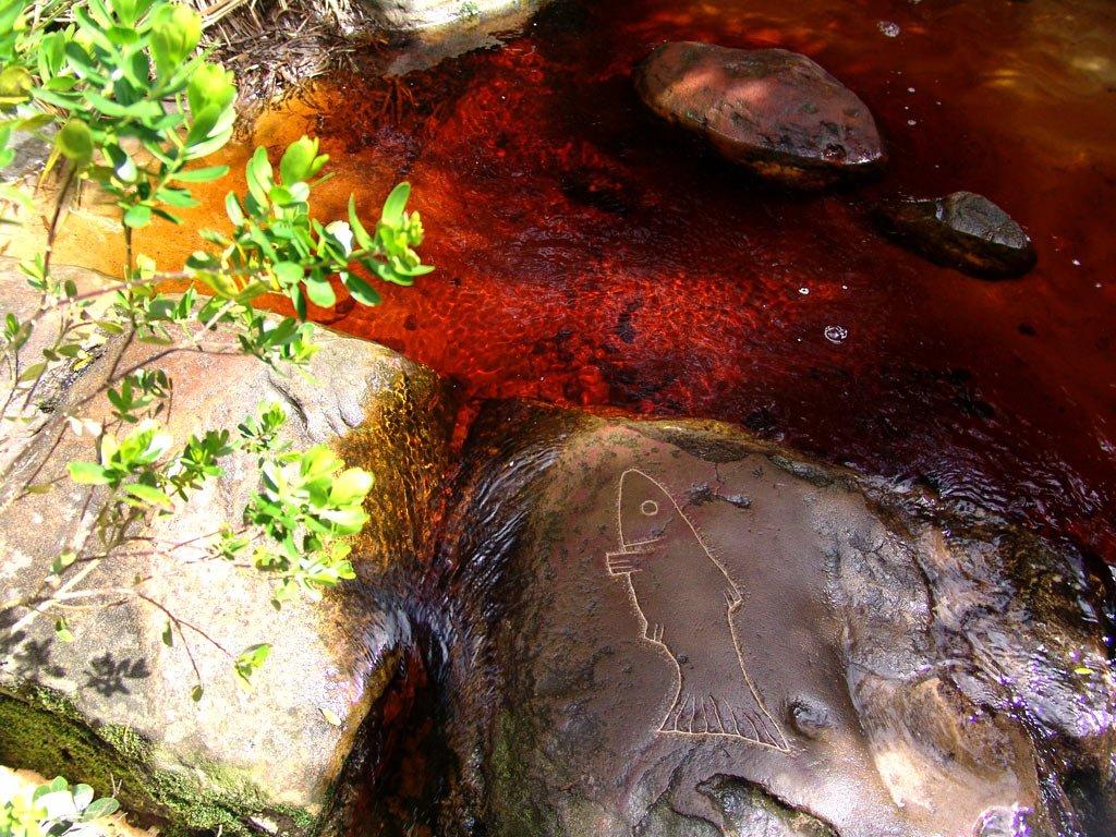 رودخانه کوچک با رنگ آب سرخ طبیعی - اطراف کیپ تاون افریقای جنوبی