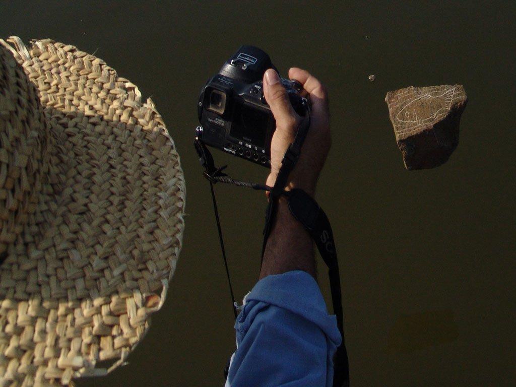 رهایی ماهی ها در آب رودخانه دانوب