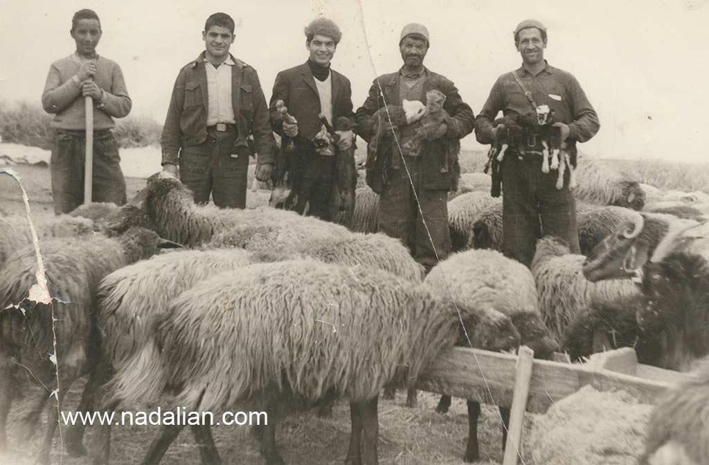 گاهی زمستان ها با عمو ها به دیدن پدربزرگ می رفتیم. فصل زایمان گوسفند ها برای ما بسیار جذاب یود.