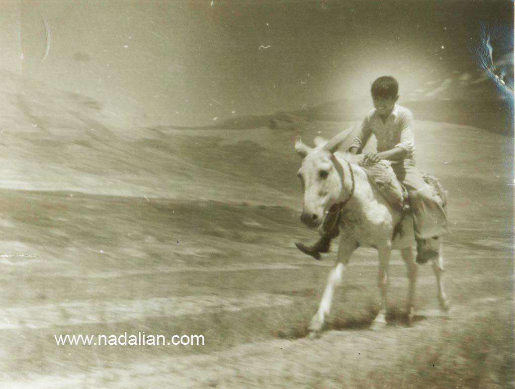 احمد نادعلیان و خر سفید خانوادگی در ییلاق تپه بالای پلور