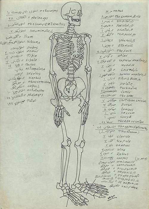 طراحی استخوان ها، دانشکده پزشکی دانشگاه تهران، تابستان 1363
