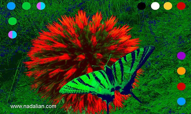Our Paradise : Interactive Multimedia Art by Ahmad Nadalian, artist web site