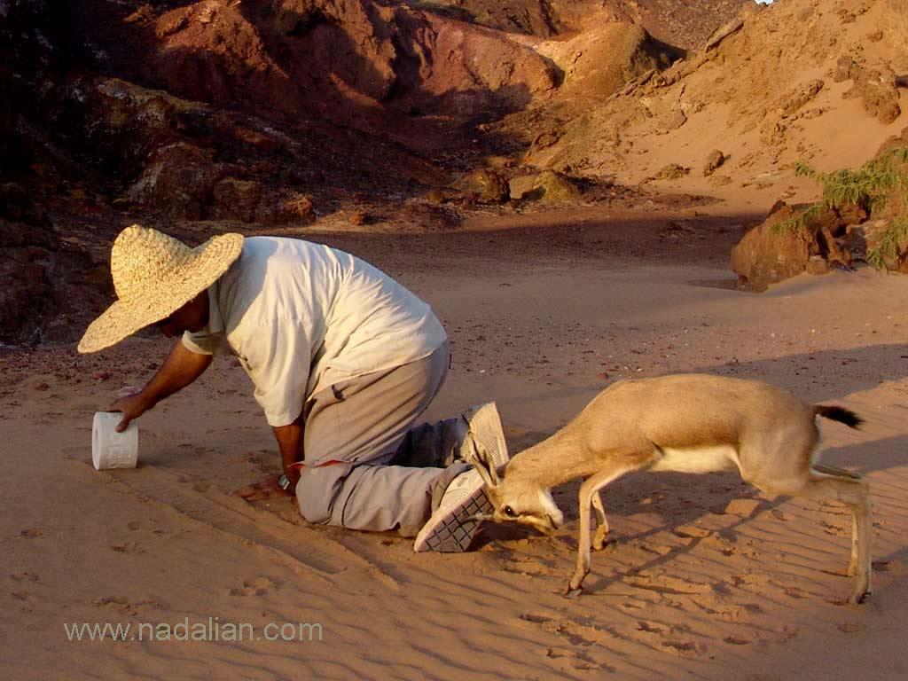 بازی آهو با احمد نادعلیان زمانیکه با استفاده از مهر استوانه ای بر روی ماسه ساحل دریا نقش چاپ می کرد، چزیره هرمز