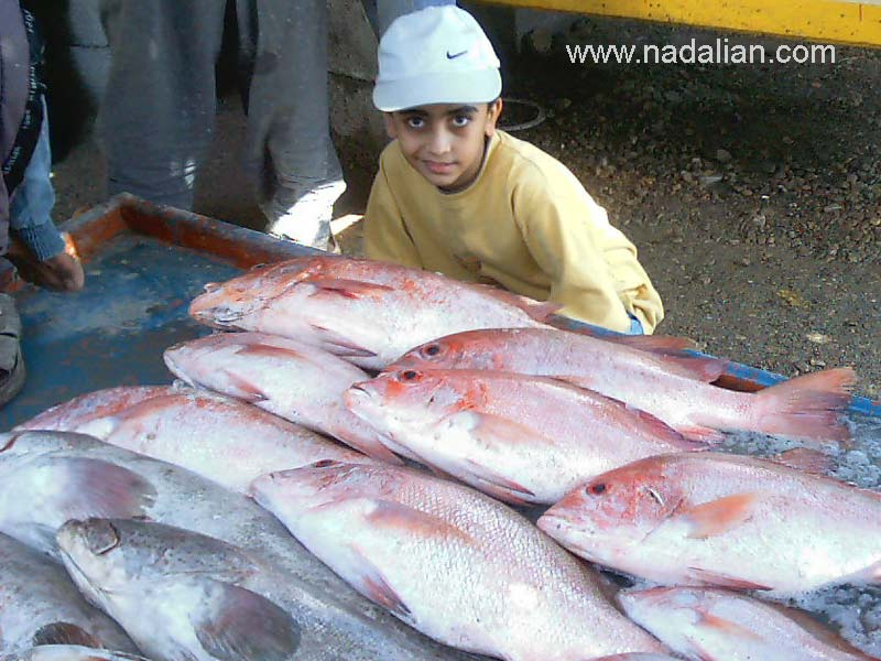 پسرم بهزاد نادعلیان در بازار ماهی فروشان بندر عباس