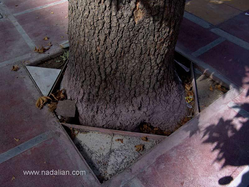 یمانکاری که مسئول نصب سنگها یود به دلیل کمبود سنگ سنگهای حجاری شده من را برش زده و تکه سنگها را در حاشیه درختهای خیابان ولی عصر به صورت وارونه نصب کرده بود.