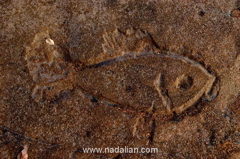 حجاری ماهی اجرا شده احتمال زیاد توسط محمد سایبانی 13 دیماه 1385