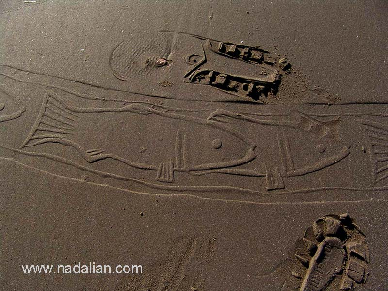 چاپ نقش ماهی با مهر استوانه ای و رد کفش ها عابران، احمد نادعلیان، بندر عباس، صبح روز 15 دیماه 1385